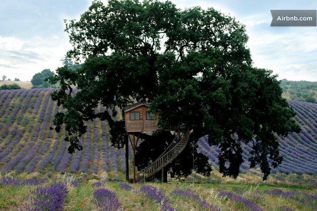 Treehouselavender