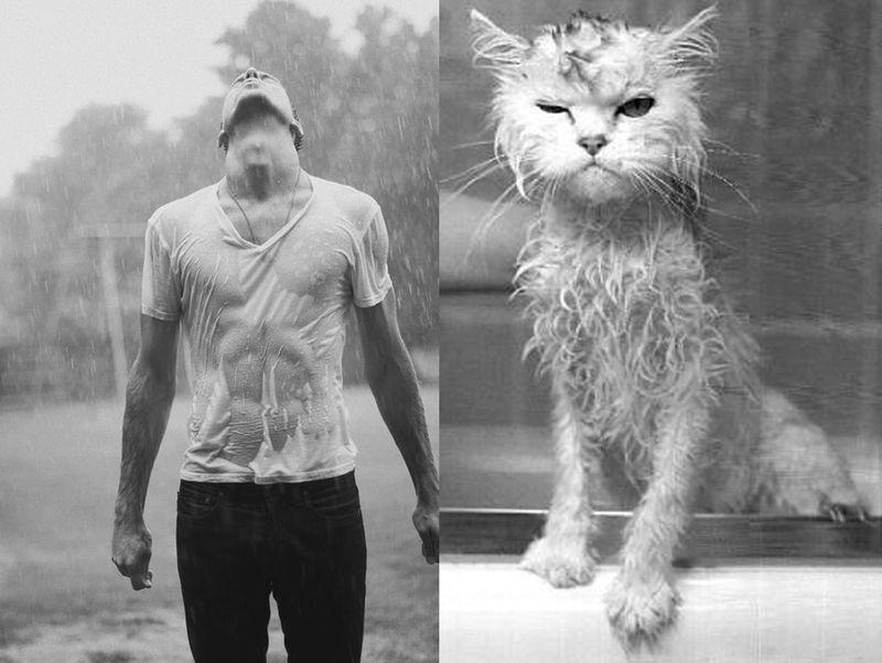 Mencats2